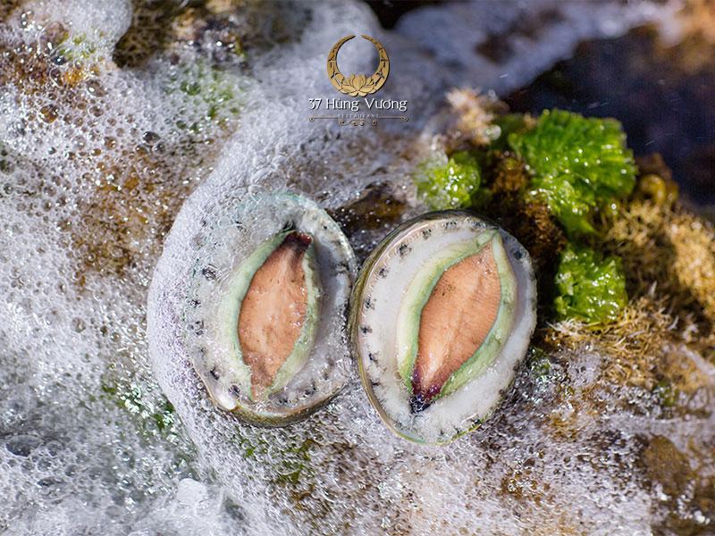 Giá trị dinh dưỡng của Bào ngư Úc viền xanh